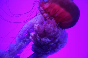 Jellyfish 6 (09/18) by Karakata