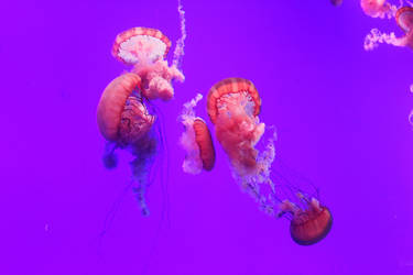 Jellyfish 3 (09/18) by Karakata