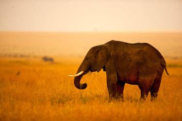 Africa' dan by Esibatir
