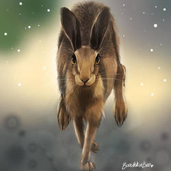 Hare study by Boochkin