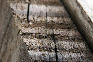 Weathered Timber by gopherboy76
