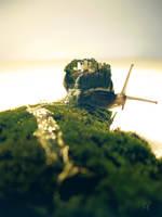 Snail World by Tamilia