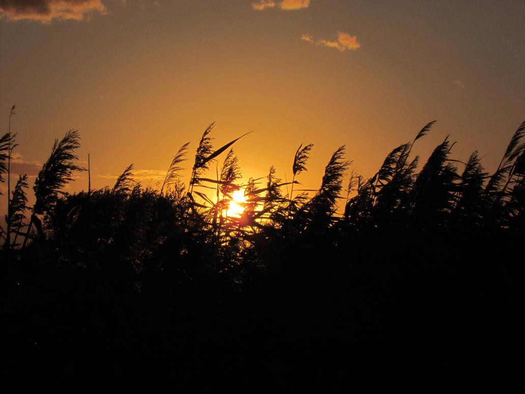 Sunset field by bormolino