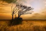 meadow by ImStuck