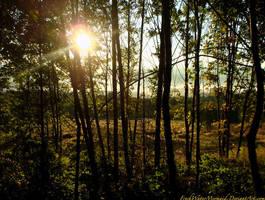 Sunrise_Through the Trees by FreshwaterMermaid