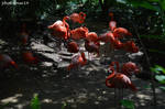 Flamingos by photolover14