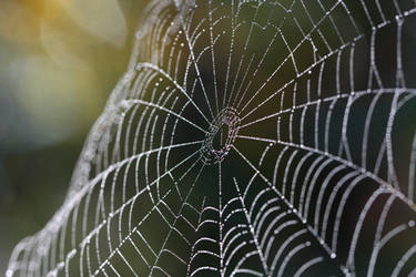 Spiders Web by PassionAndTheCamera