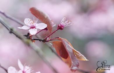 Rainy spring day by PassionAndTheCamera