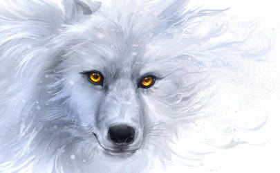 Canis Lupus by Delun