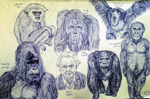 Apes by MickeyRayRex