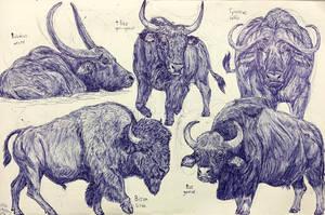 Bovines by MickeyRayRex
