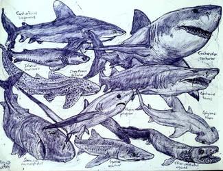 Sharks Again by MickeyRayRex