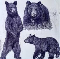 Black Bears by MickeyRayRex
