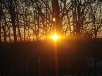 Burst of sunrise trees by SimplyKristina