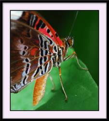 butterfly.... by ben5069