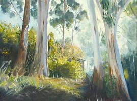 light on gum trees by westaussie