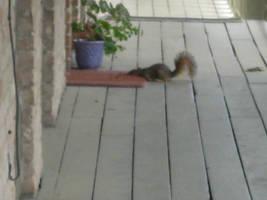 A few nuts short... by Kijikun