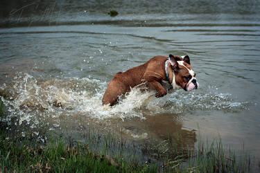 Flying Bulldog by Elvandia