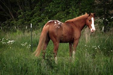 The Prettiest Pony by Elvandia