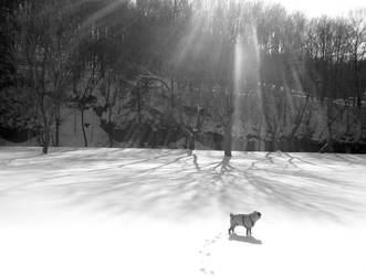 Rays Shadows and a Pug by hotrats51