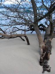 Josiahs Bay Sand Tree by hotrats51