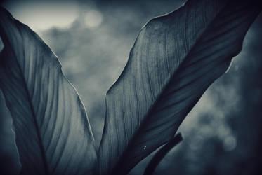 weirdly melancholic by Czarnopolski