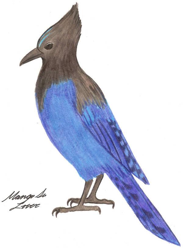 Steller's Jay by Nukeleer
