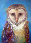 Barn Owl no.16 by JACK-NO-WAR