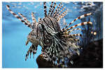 Lion Fish by tifftoxic