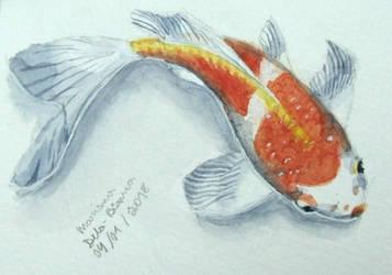 Koi fish watercolor by jujubaverde