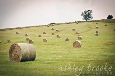 -- The Country Life -- by AshleyxBrooke