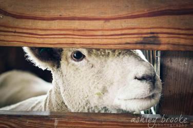 -- Peek A Boo -- by AshleyxBrooke