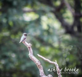 -- High Up -- by AshleyxBrooke