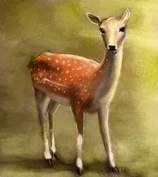 Roe Deer by Artofjuhani