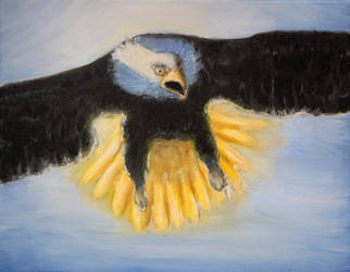 Bald Headed Eagle by Artofjuhani