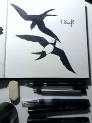 Inktober 2017 1. Swift by Citron--Vert