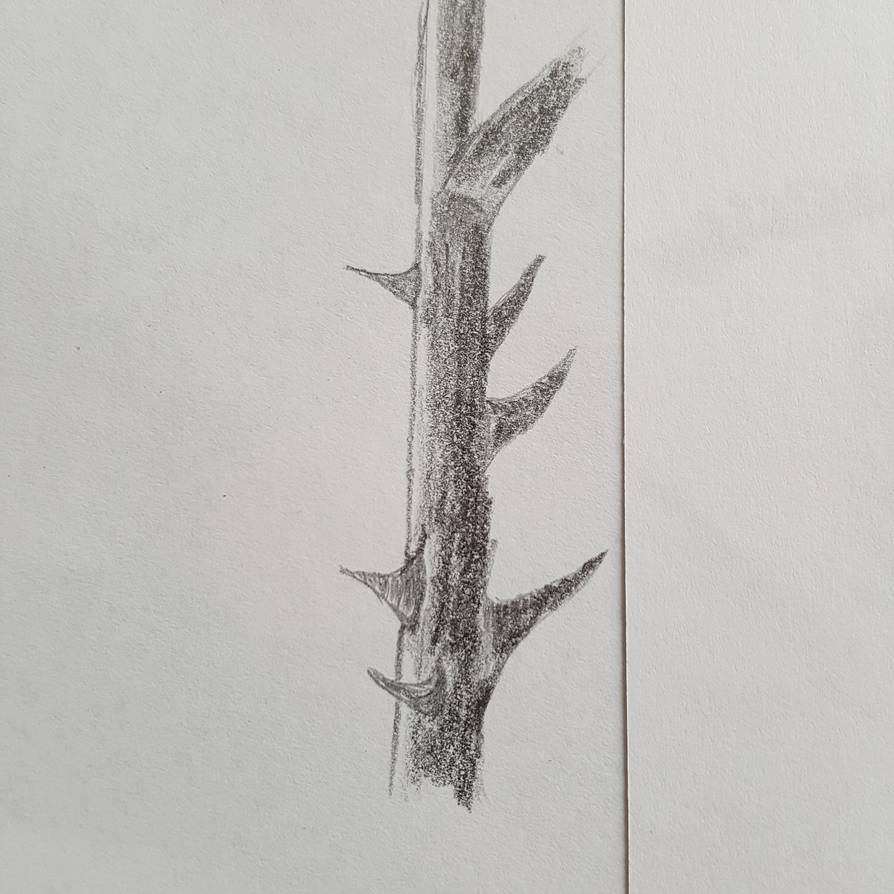 5 minute sketch of a rose branch. by dorofo