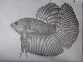 Siamese Fighting Fish by 666Devil-in-disguise