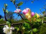 My little Pony - Baby Mischief in the apple tree by Flicksi