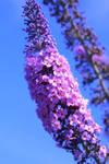 Enchanters Emporium: Purple presents by Saatua