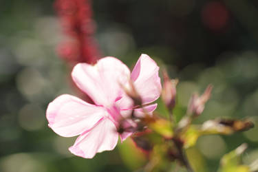 Luminous Pink Pt. 2 by Saatua