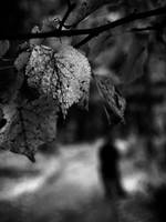 in autumn i feel sad by ssuunnddeeww