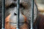 Jailed by Redbuddha15