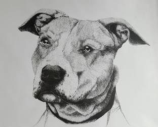 Staffordshire Bull Terrier by vermilionbirdy