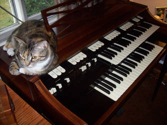 Cat on Hammond Organ by HammondsNTrains