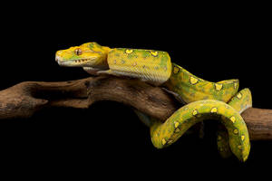 Yellow snake stock by A68Stock