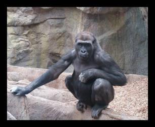 Gorilla 3 by shadowolff24
