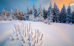 Snowdream by EmmmBeee