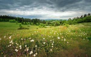Flowery Meadow by EmmmBeee