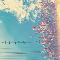 Spring Break by Wnison